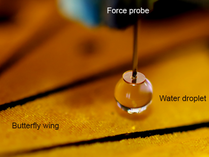 Photo of scanning droplet adhesion microscope's measurement probe above a butterfly wing