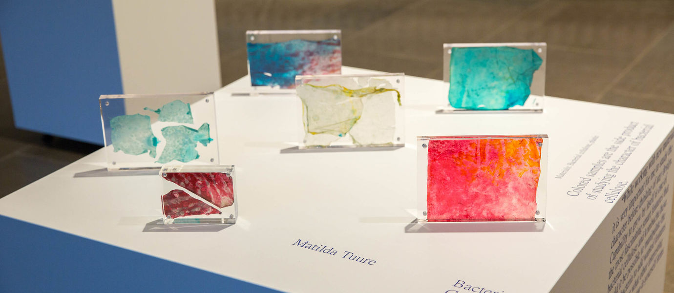 Unexepected encounters exhibition: Matilda Tuure's colourful glass work presenting Bacterial Cellulose Samples