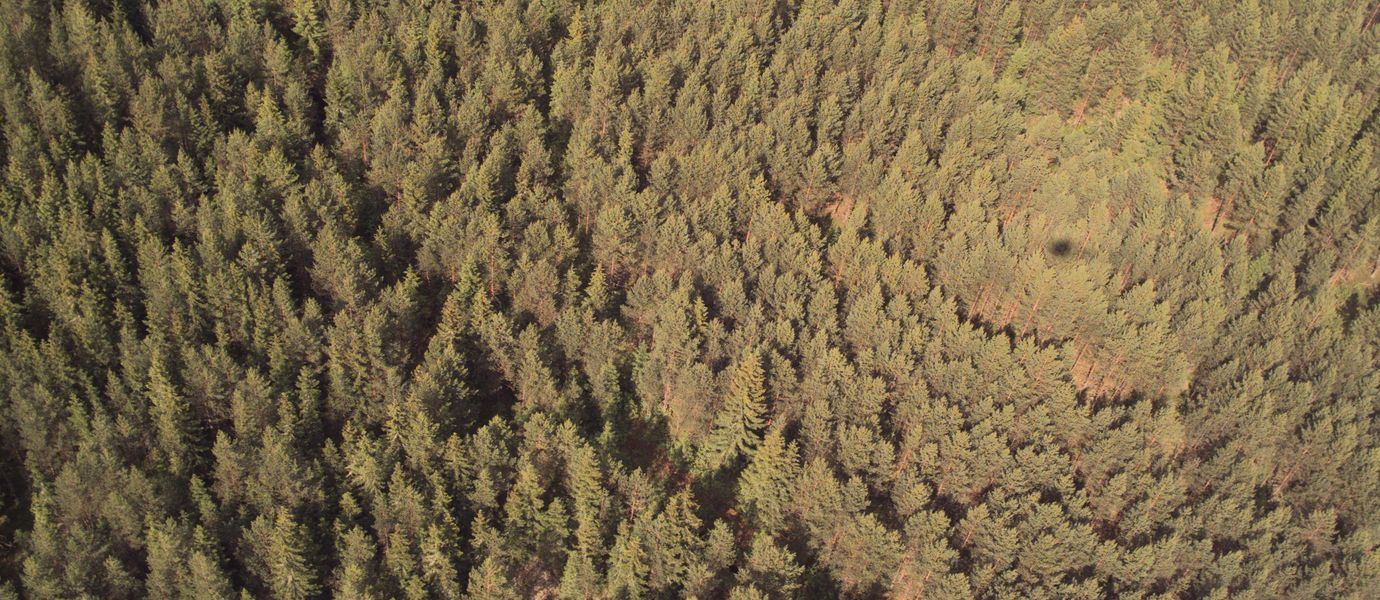 aerial picture of forest