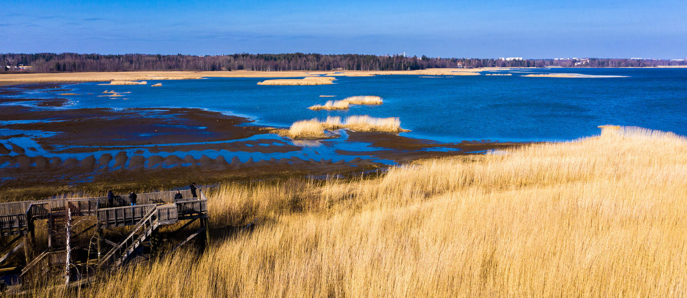 Blue sea, golden grass and green woods in a view to Laajalahti nature reserve