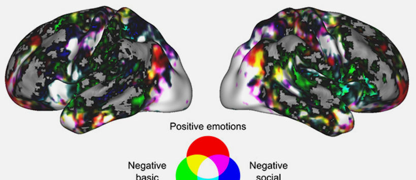An emotional state mainly activates wide, overlapping neural networks. When comparing groups of emotions, positive emotions activate the anterior prefrontal cortex, negative basic emotions tend to activate the somatomotor and subcortical regions, and negative social emotions activate brain areas that process motor and social information. Image: Heini Saarimäki.