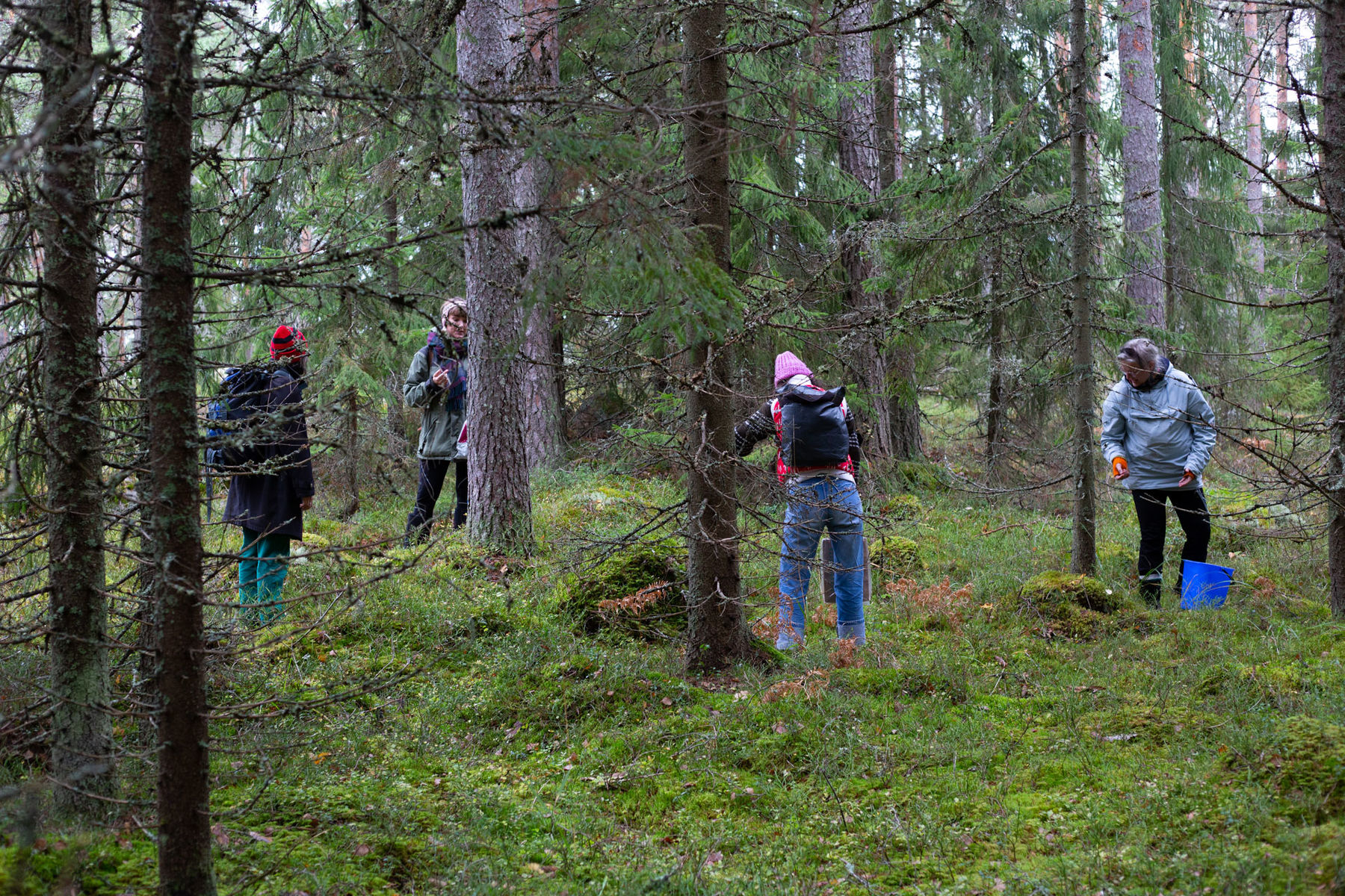 Four ViCCA students stand apart amongst the forest trees looking for mushrooms