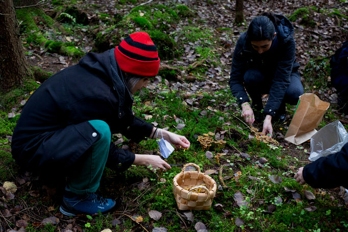A group of students crouch in the forest to pick funnel chanterelles. A woven basket is in the middle and they are placing mushrooms into it.