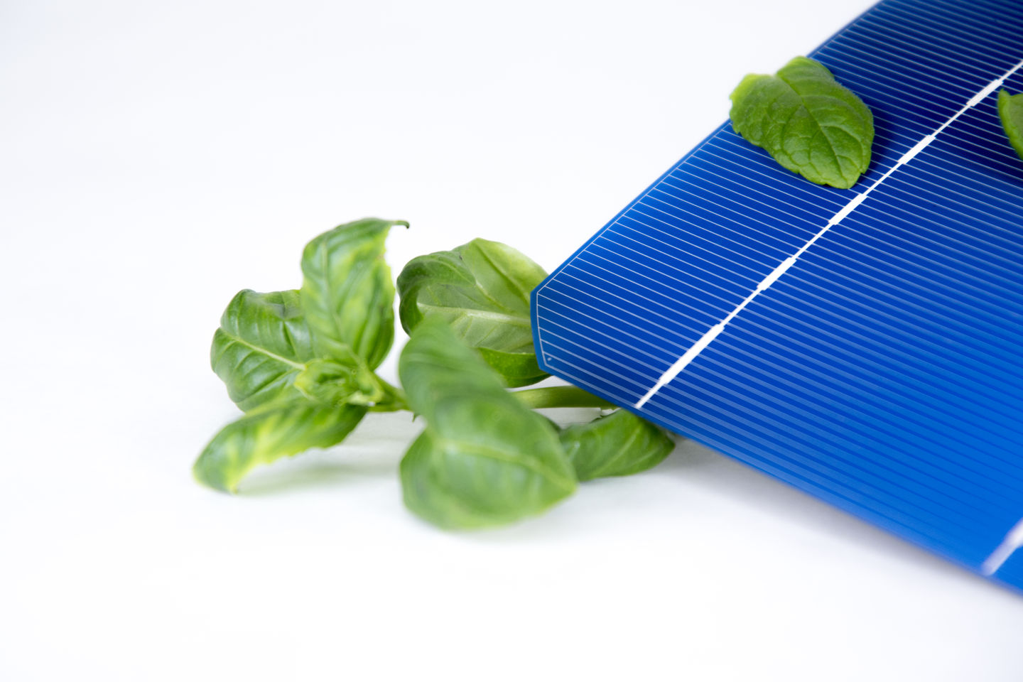 Solar cell and vegetation, researcher Janne Halme, photo Valeria Azovskaya, 2019