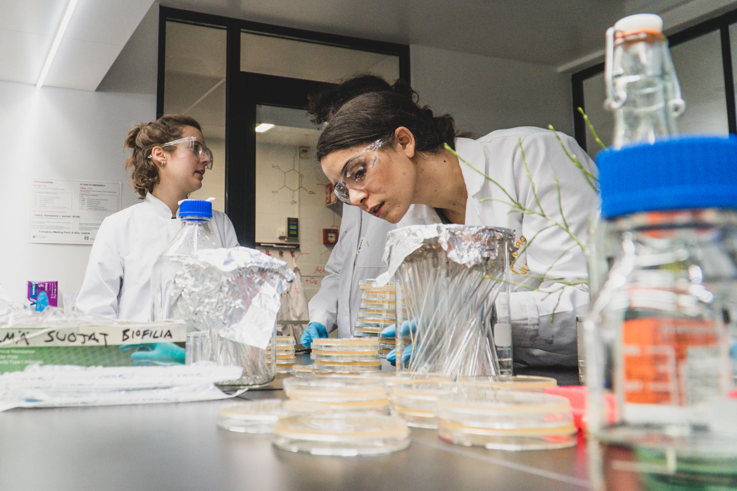 A student arches over the laboratory workspace to look more closely at some of the petri dishes laid out before her. In the background, two students converse with each other.
