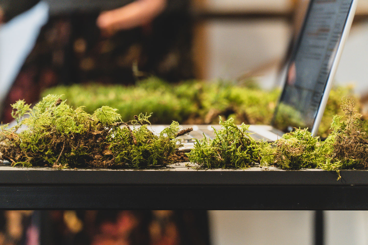 Green moss is placed around a macbook as part of an exhibition display